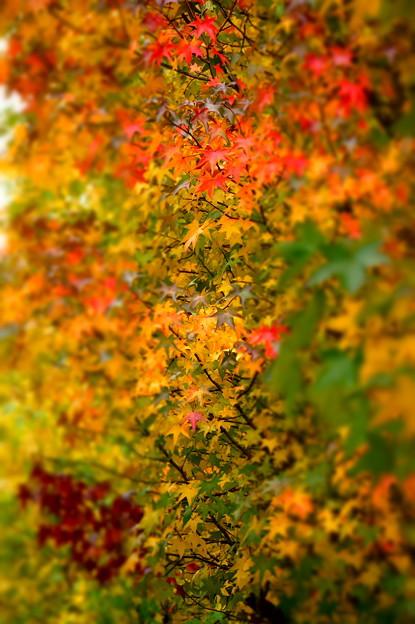 秋のモザイク 3