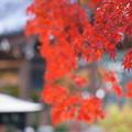 境内の秋模様