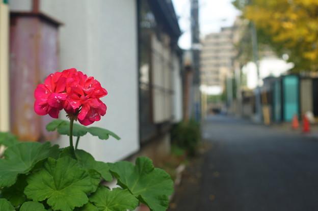 京王線 (61)