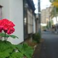 Photos: 京王線 (61)