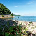 写真: 浜辺に咲く花