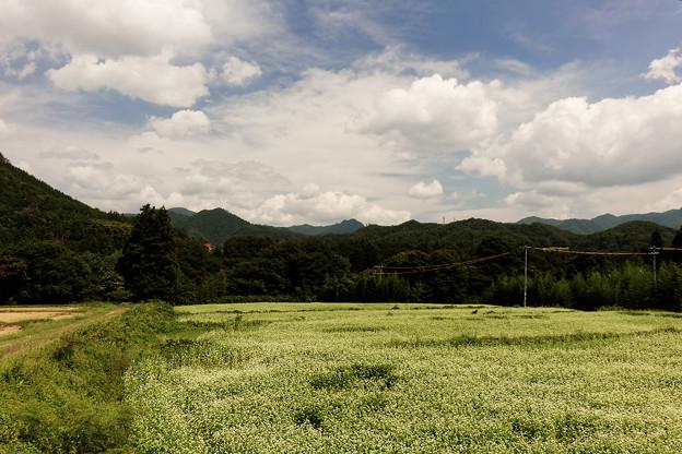 写真: 白い花 白い雲