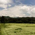 Photos: 白い花 白い雲