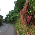 写真: 萩の咲く径