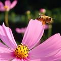 花粉まみれで「さようなら」 (=^^=;)