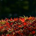 写真: 落ち葉の紅葉