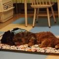 写真: 何処で寝ようかな1