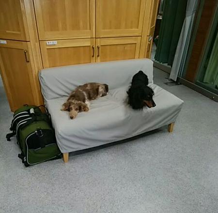 診察室でもリラックス