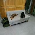 写真: 診察室でもリラックス
