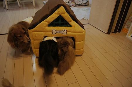 新しいお家3