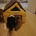 写真: 新しいお家3