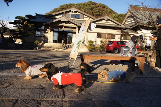 写真: 光明寺でハプニング1