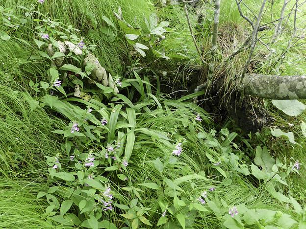 Photos: 山に咲く花