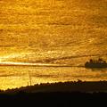 写真: 黄金の海