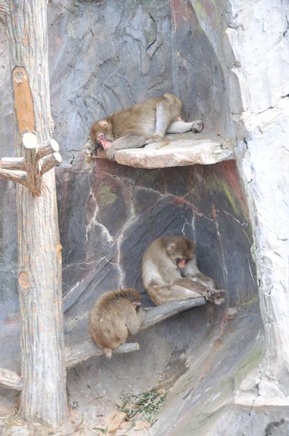 20170914釧路動物園NO.13