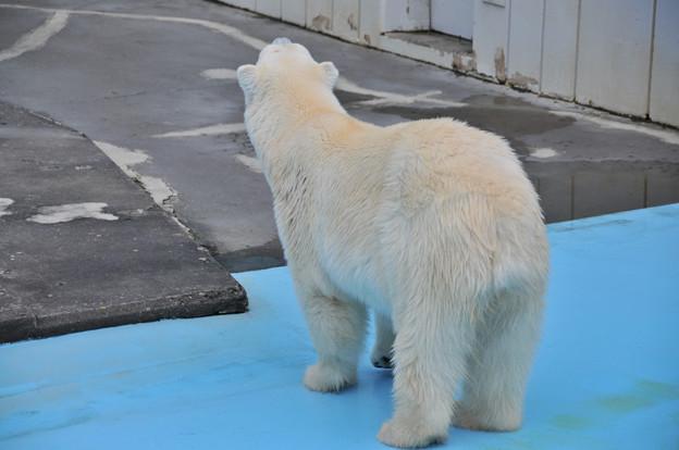 20170914釧路動物園NO.16