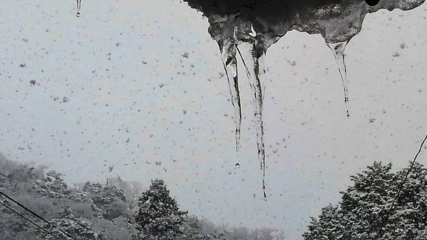 写真: 冬の風物詩