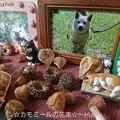 Photos: アンちゃんの日☆