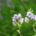 帯広 「六花の森」 170530 01