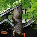 写真: 富良野 「森の時計」 170606 01