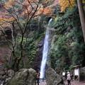 写真: 岐阜 養老の滝 151202 01