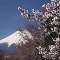 富士山 150416 01 忍野村から