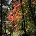 写真: 比企 嵐山渓谷 171121 03