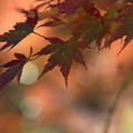 写真: 比企 嵐山渓谷 171121 06