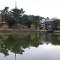 写真: 猿沢池 171129 01