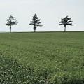 写真: メルヘンの丘