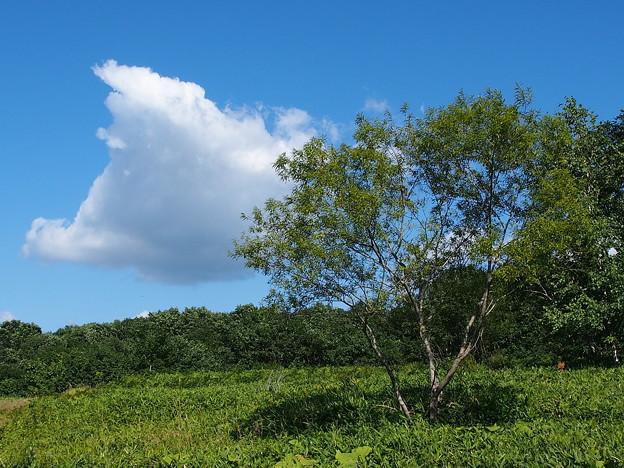写真: 北海道の夏の空