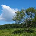 北海道の夏の空