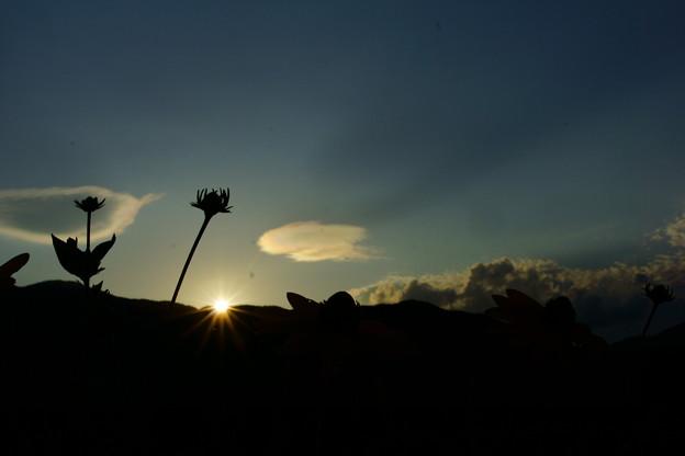 路傍の花と夕陽