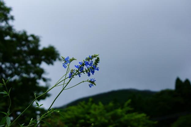 写真: 雨の止み間に