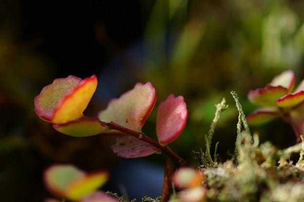 盆栽棚の秋