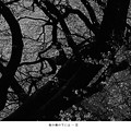 写真: 桜の樹の下には…II