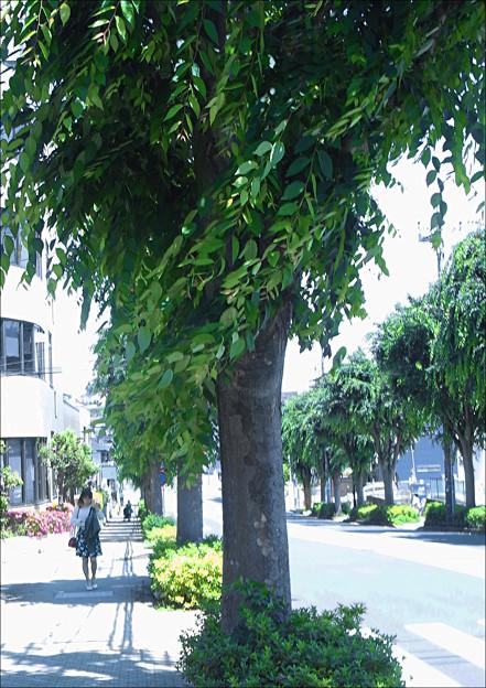 夏日、街路樹、通り風