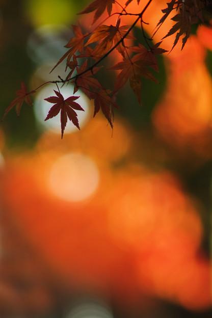 Photos: 秋色の日