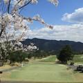 足利カントリークラブ飛駒コース1番桜2017.4.13