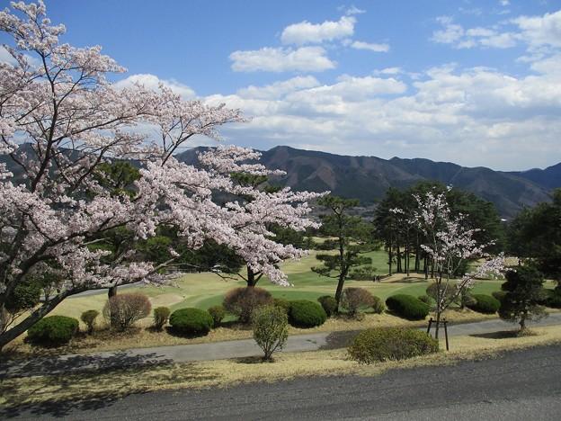 足利カントリークラブ多幸コースのハウス前からの桜の景色2017.4.13