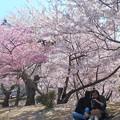 満開の桜の木の下で@カメ女