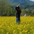 Photos: うららか菜の花畑@世羅高原
