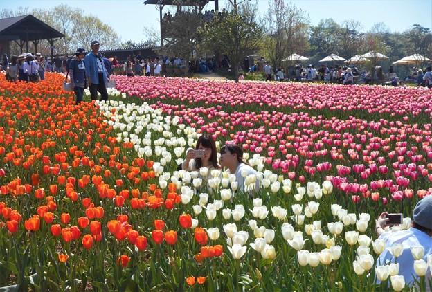 のどかな日曜日@世羅高原の春