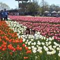 Photos: のどかな日曜日@世羅高原の春