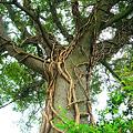 Photos: この木何の木