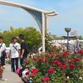 写真: 緑町公園会場のばら花壇の屋上風景@福山ばら祭