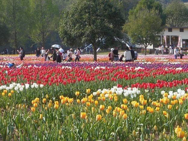チューリップ畑の休日@世羅高原の春