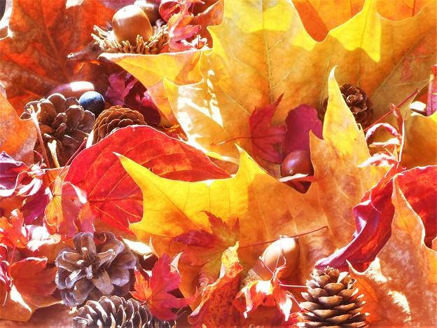 写真: びんご運動公園の秋