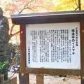 写真: 佛通寺の紅葉とイヌマキ@広島県天然記念物@三原市教育委員会