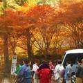 写真: 華やぐ紅葉@永徳院前